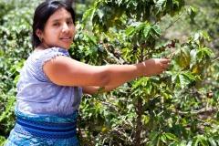 blog-bestravel-costa-rica-agricultura