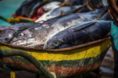 blog-bestravel-ilha-do-sal-peixe