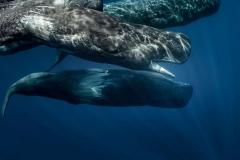blog-saomiguel-acores-bestravel-whalewatching